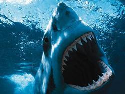 Creador del tema: Jassiel Shark Tj